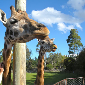 Adventures In :: New Zealand #3 – Orana Wildlife Park