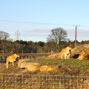 Day Tripping :: Yorkshire Wildlife Park #4