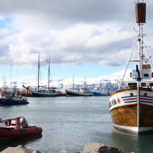 Adventures In :: Iceland – Whale Watching in Húsavík