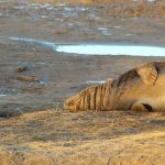 Day Tripping :: Seals at Donna Nook Nature Reserve