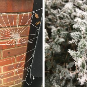 Frosty Spiderwebs